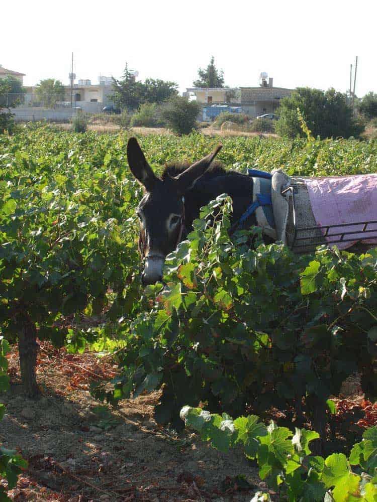 wineharv2013-2