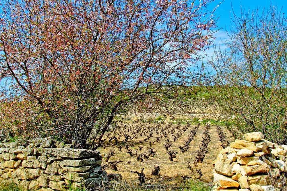 wineharv2013-5