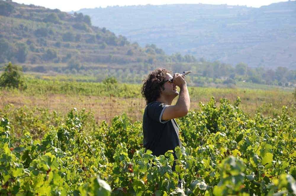 wineharv2013-7