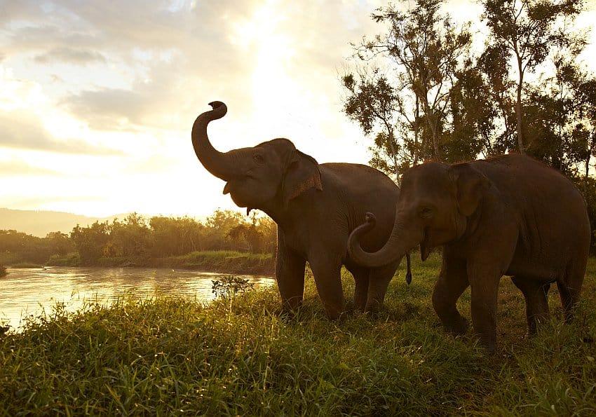 Elefanten Nordthailand