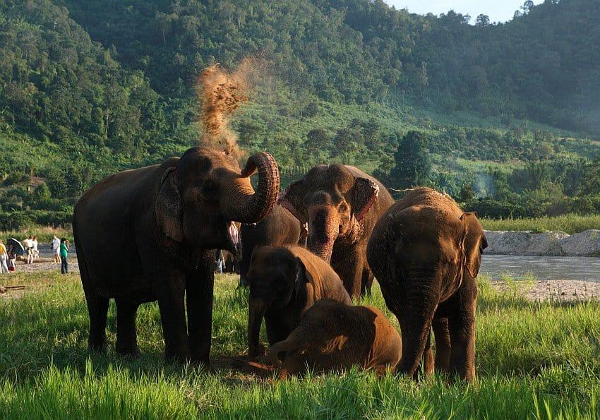 Elephant Center