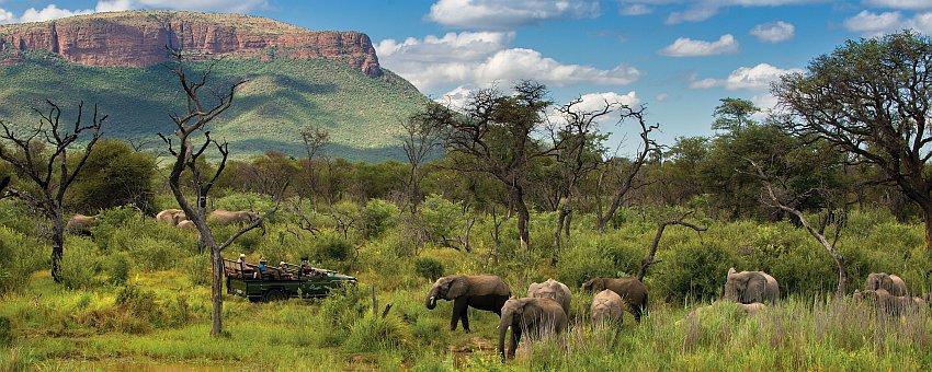 Header Safari