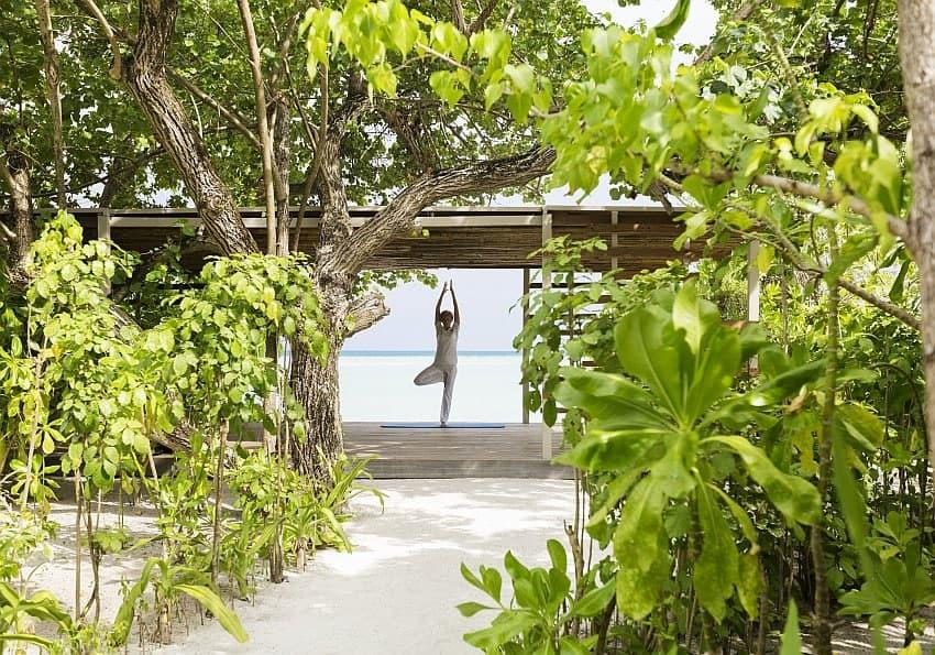 Lebensbaum Malediven