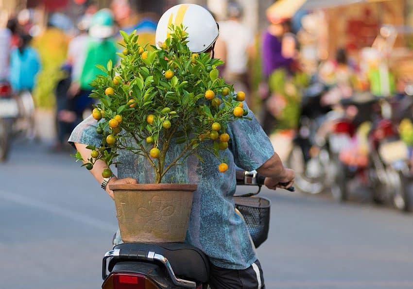 Neujahrsfest in Vietnam