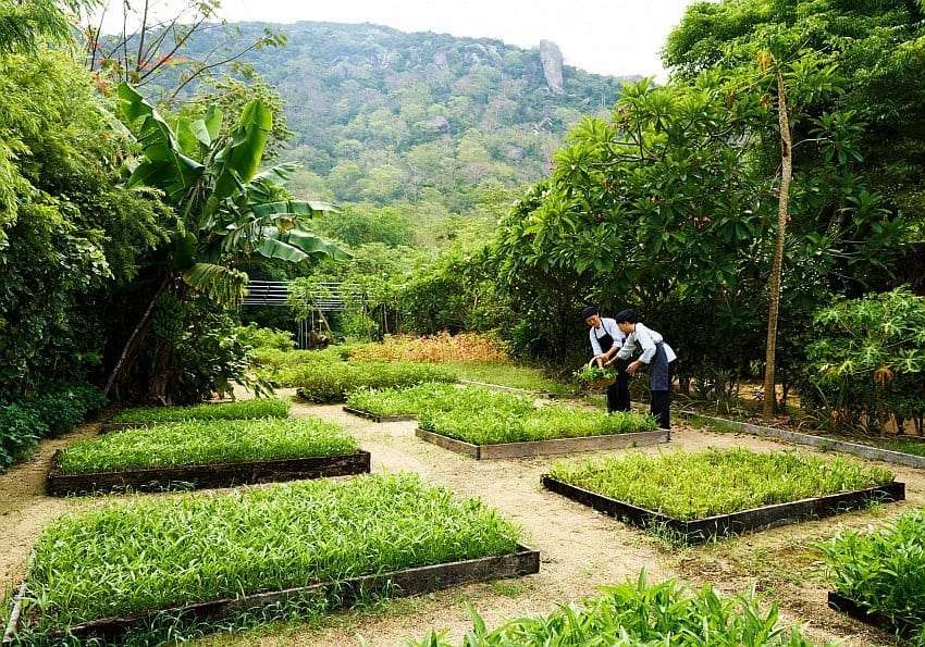 Organic Garden At Six Senses Ninh Van Bay Highres