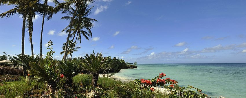 Sansibar Strand Palmen