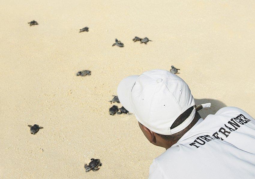 Schildkröten Ranger Oman