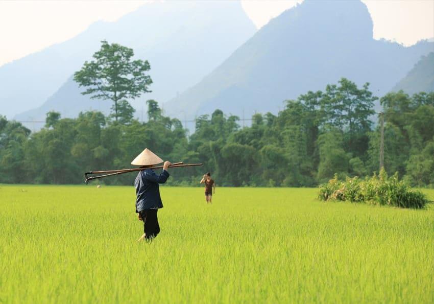 Vietnam Reisfeld Bauern