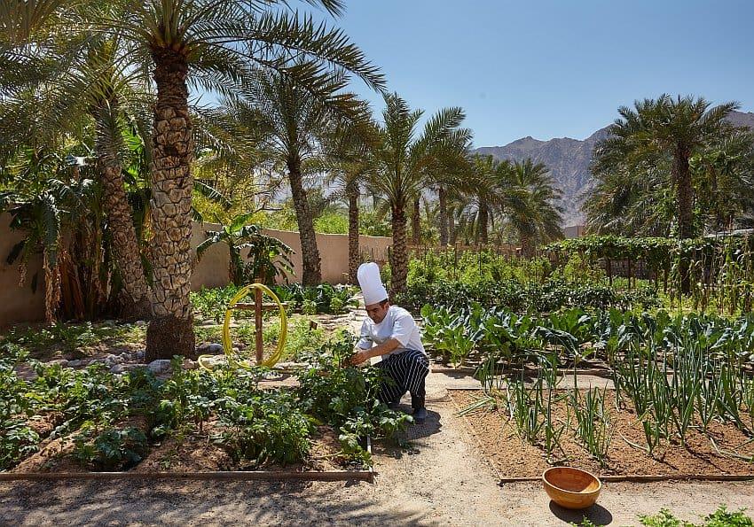 Zighy Bay Organic Garden Blog