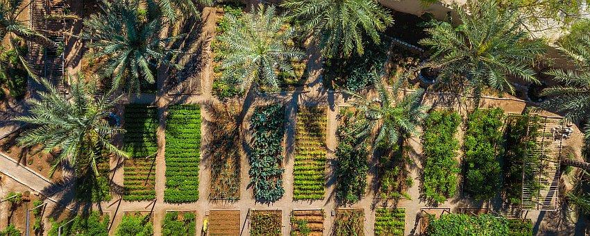 Zighy Bay Organic Garden Header