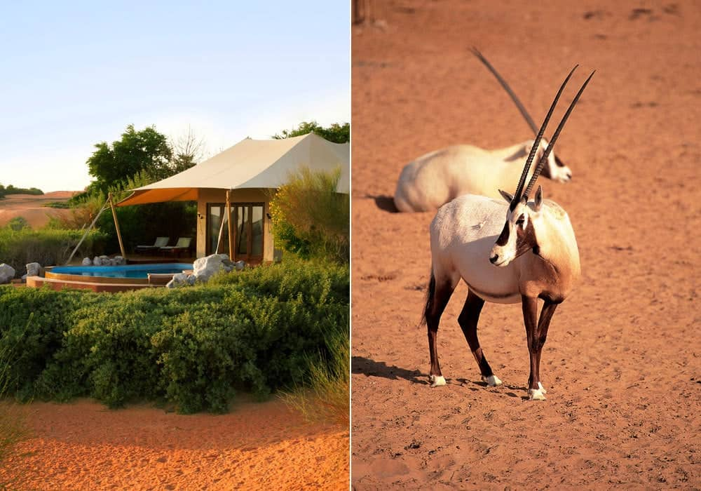 Bedouin Suite und Oryx
