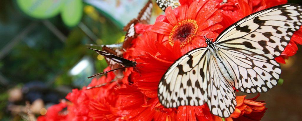 Schmetterlingsgarten Changi