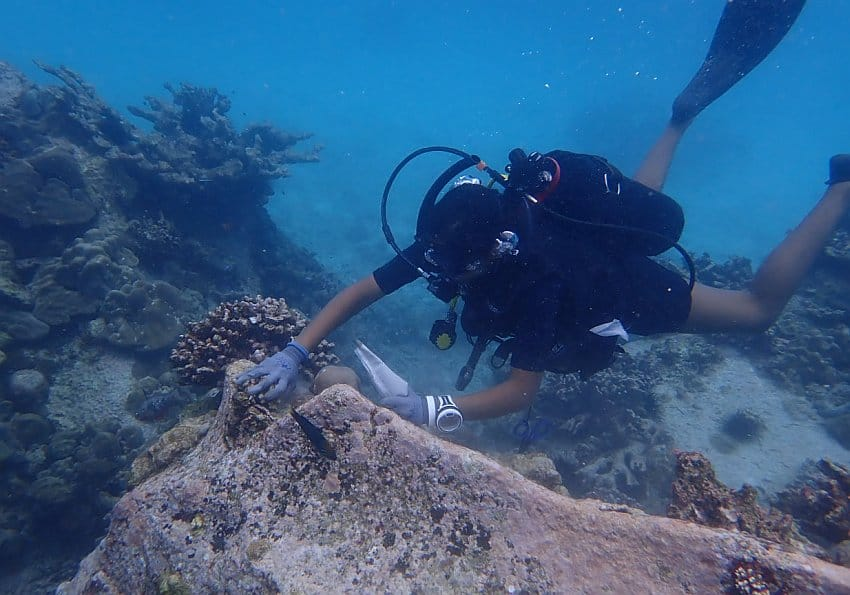 Coral Replantation