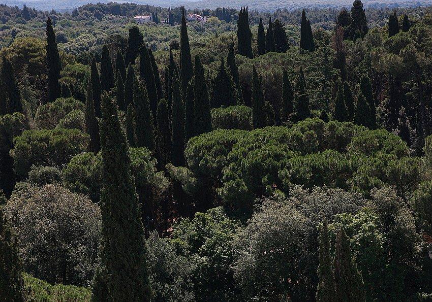 Zypressen Landschaft Istrien
