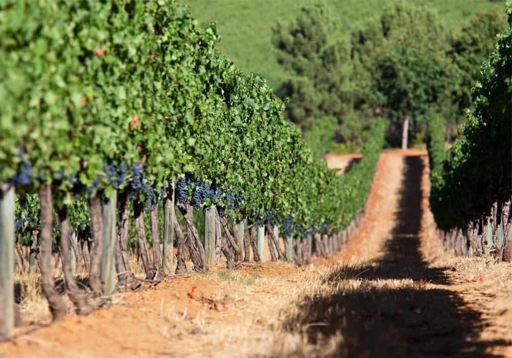 Südafrika Winelands