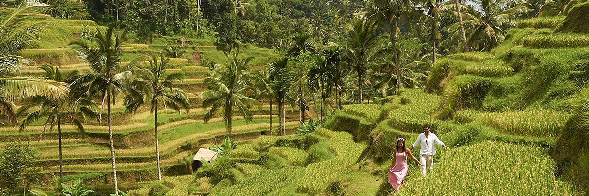 Rundreisen Bali Hotels günstig buchen