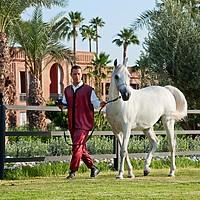 Selman Marrakech - Ställe
