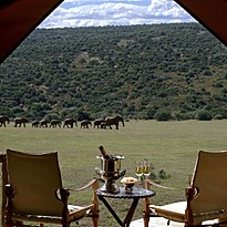 Luxury Tented Suite - Gorah Elephant Camp