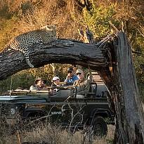 Mala Mala Private Game Reserve