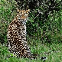 Murchison Falls Nationalpark - Uganda 14 Tage - die Perle Afrikas
