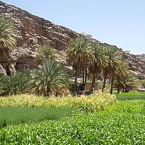 Rundreise Oman - Northern Oman