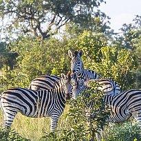 Queen Elizabeth Nationalpark - Uganda 10 Tage - pures Afrika