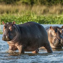 Queen Elizabeth Park - Uganda 7 Tage - Highlights