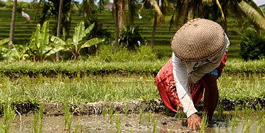 Balis Land und Leute