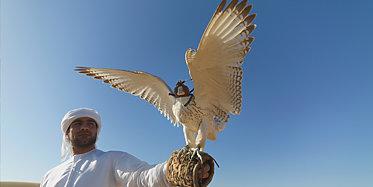 Besuch der Falkenklinik in Abu Dhabi