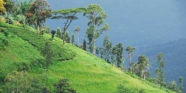 Besuch der Handunugoda Teeplantage