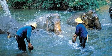 Elefanten Camp und Orchideen Farm