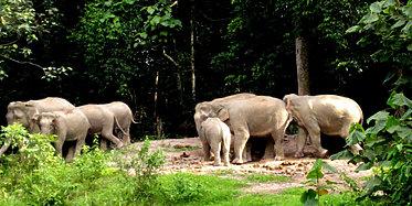 Kaeng Krachan Nationalpark inkl. Mittagessen
