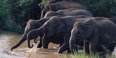 Uduwalawe Nationalpark