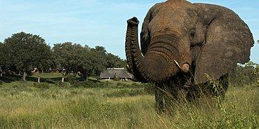 Kapstadt, Weinregion & Safari