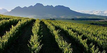 Kapstadt & Weinregion
