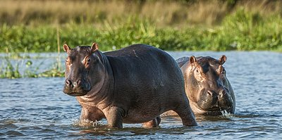Queen Elizabeth Park - Uganda 10 Tage - pures Afrika