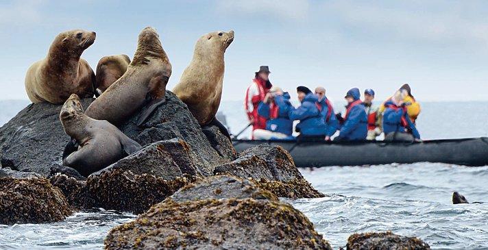 Antarktis Tierbeobachtung