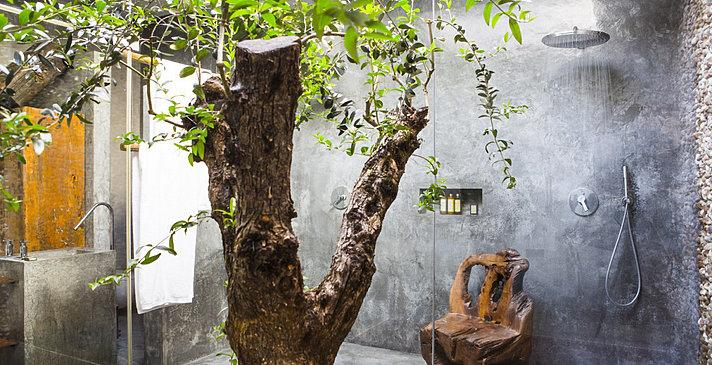 Tree Room (Oliveira Princesa) - Areias do Seixo